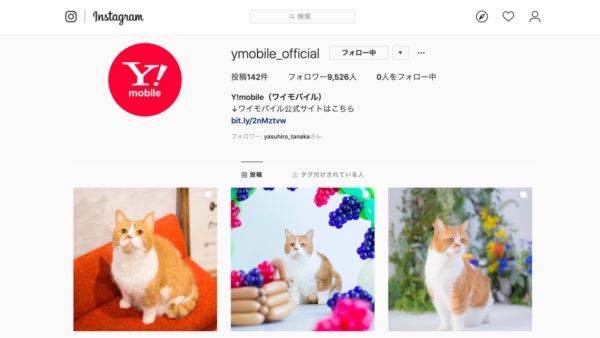 Ymobile公式Instagram ふてにゃん撮影